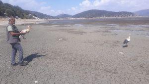 Kumluca Belediyesi Sahip Çıktığı Leylekleri Doğaya Bıraktı